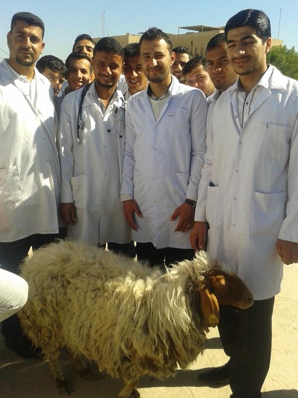 فحص نعجة3-5-2015