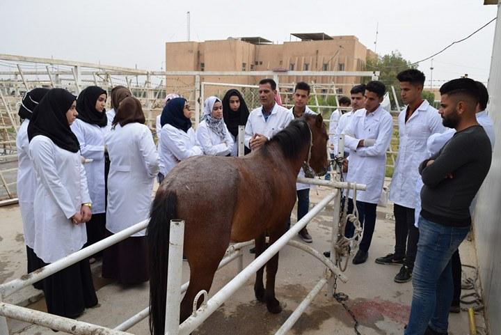 حملة لمتابعة الحيوانات التابعة للحقل الحيواني في كلية الطب البيطري
